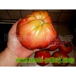 Ντομάτα γίγας στην Πρέβεζα σπόρος