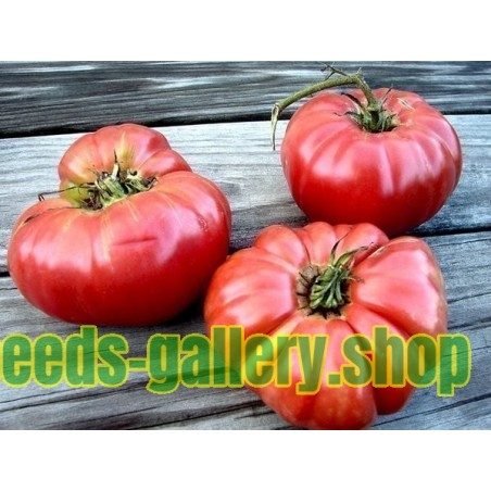 Giant Beefsteak Greek Tomato Seeds PREVEZA