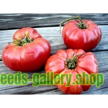 Sementes De Grega Beefsteak Tomate Gigante PREVEZA