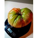 Honigmelone PRESCOTT FOND BLANC Samen