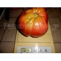 PRESCOTT FOND BLANC Melon Seeds - Seed