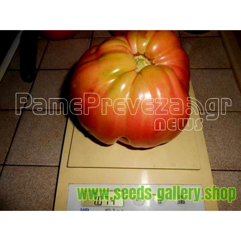 Semillas de Tomate Griego Beefsteak Gigante PREVEZA