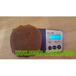 Giant Kiwifruit Seeds