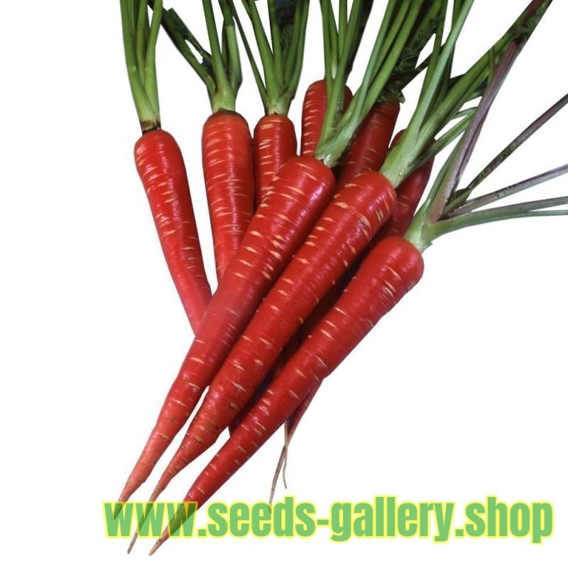 Sementes de Cenoura Vermelha - Atomic Red