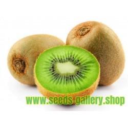 Sementes de quiuí, quivi ou kiwi GIGANTES