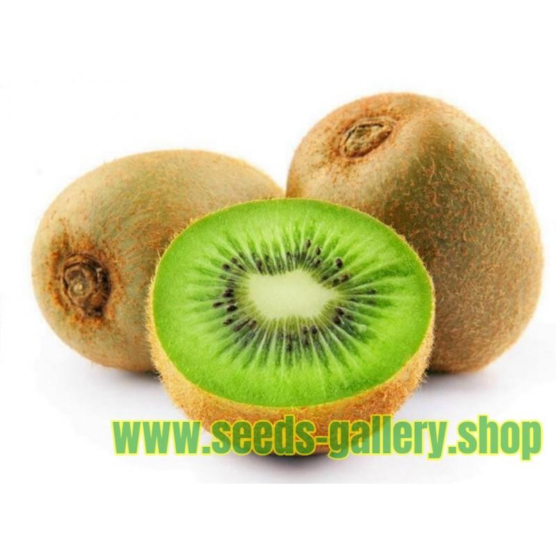 Riesen Kiwi Samen