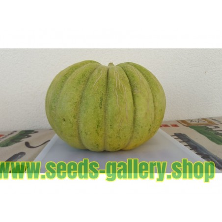 Graines de Grèce Melon VERT BANANA