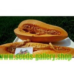 Graines de Grec traditionnel géant Melon KALAMBAKA