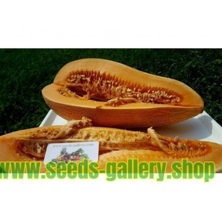 Semillas de melón gigante griego tradicional KALAMBAKA