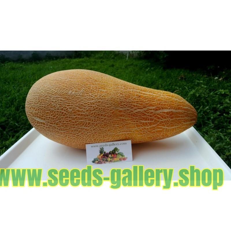 Traditionelle Griechische Riesen Melone KALAMBAKA Samen
