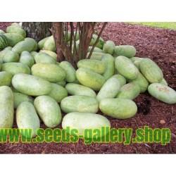 Seme Lubenice Charleston Gray