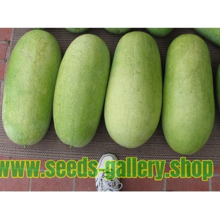 Wassermelone Samen Charleston Gray