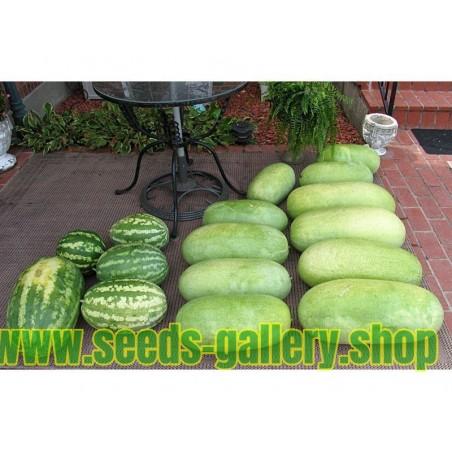 Vattenmelon frön CHARLESTON GRAY