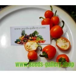 Sementes de Pimenta Cherry Laranja