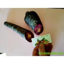Semillas de Zanahoria Purple Dragon