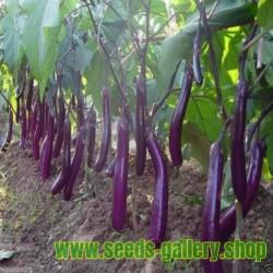 Italienische Aubergine Samen - Lange Lila