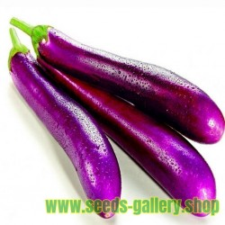 Graines D'aubergines Italienne Longue Violet