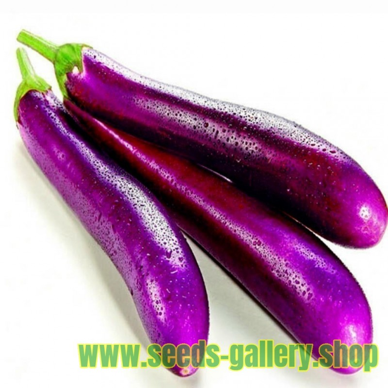 Italian Aubergine - Long Purple Seeds