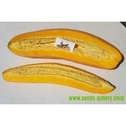 Sementes de abóbora Jumbo Banana-de-rosa