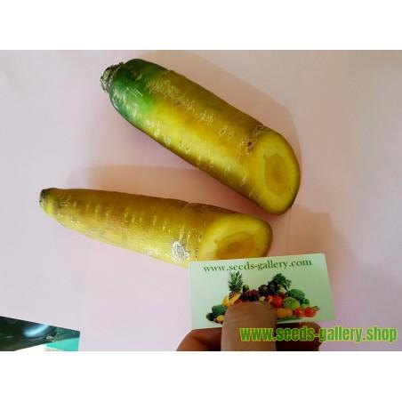 Carrot Seeds Solar Yellow