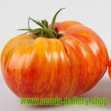 Sementes de tomate Mr Stripey