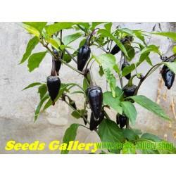 Σπόροι Τσίλι - πιπέρι Serrano Purple