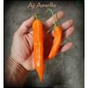 Aji Amarillo - Peruvian Chili Pepper Seeds