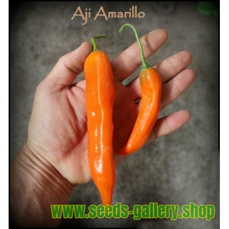 Aji Amarillo - Peruvian Chili Pepper Seeds