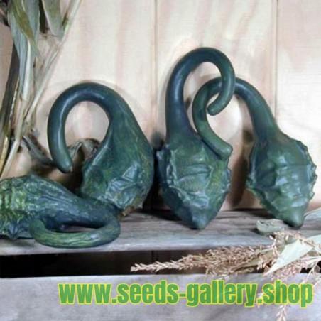 Sementes de Maranka Gourd - Cabaça Dinossauro