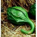 Hennabuske Frön (Lawsonia inermis)