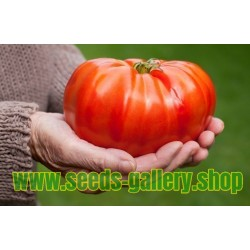 Graines de tomate Géant MORTGAGE LIFTER