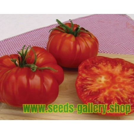Beefsteak Tomato Seeds MORTGAGE LIFTER