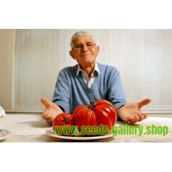 Sementes de tomate gigante MORTGAGE LIFTER
