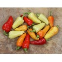 Hot Chilli Pepper Seeds SANTA FE GRANDE - GUERO