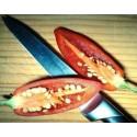Semillas de Bougainvillea - Buganvilla Violeta y Rojo