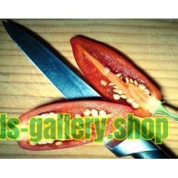 Chilipeppar Fröer CALORO
