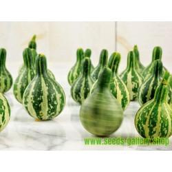 Fröer till zucchini DANCING - SPINNING