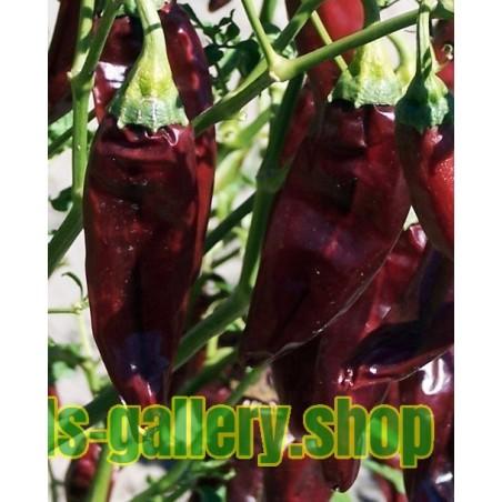 Seme Cuvene Meksicke Chili – Cili Papricice ONZA