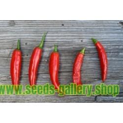 Chilipeppar Fröer ONZA