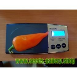 Apelsin Pyramid Chili Fröer (Capsicum annuum)
