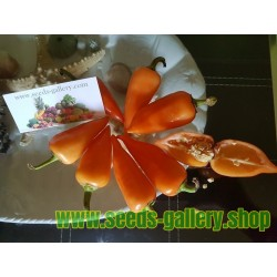 Πορτοκαλί Πυραμίδα τσίλι Σπόροι (Capsicum annuum)