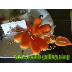 Orange Pyramid Chili Seeds (Capsicum annuum)