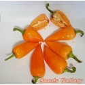 Bitter Orange Seeds (Citrus aurantium)