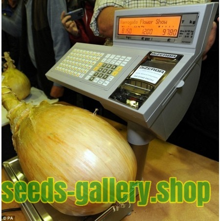 The Kelsae Giant Onion Seeds