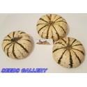 Semillas de Madroño frutos deliciosos (Arbutus Unedo)