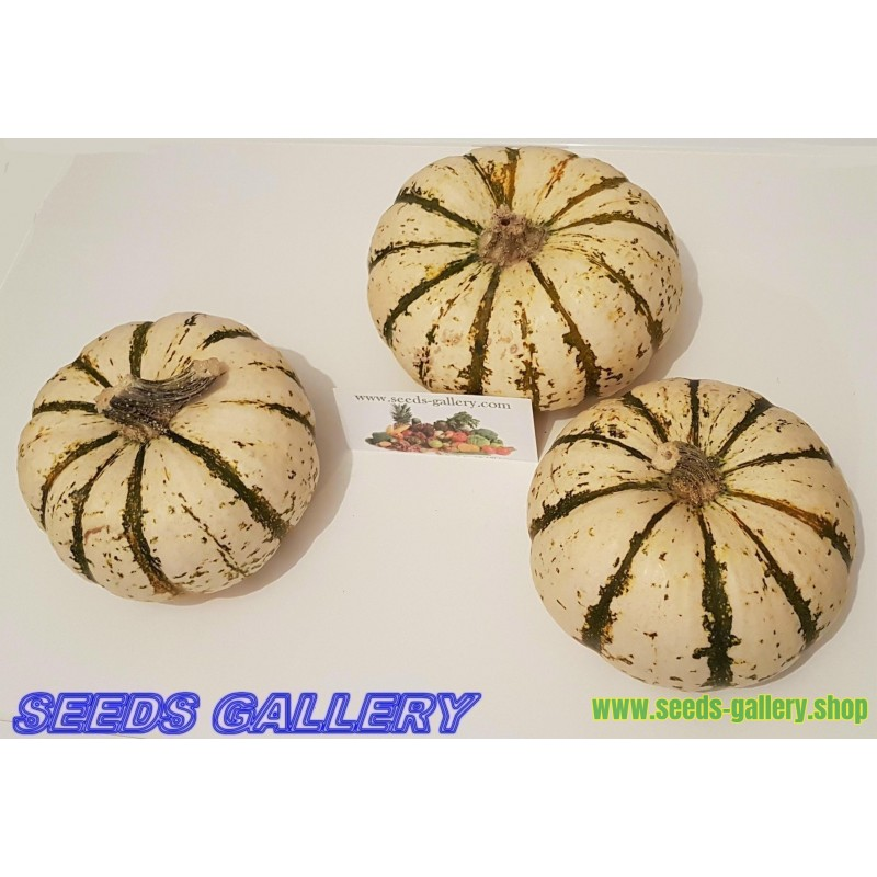 Long of Naples Squash Seeds