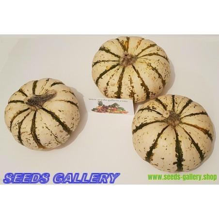 LIL' PUMP-KE-MON Pumpkin Seeds