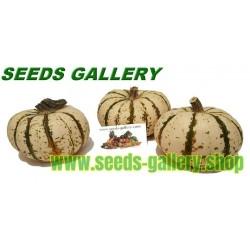 Semi di Zucchino LIL' PUMP-KE-MON