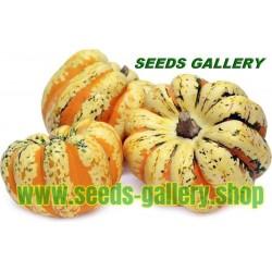 FESTIVAL kürbis Samen Speise - und Zierkürbis