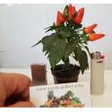 Semi di CILIEGIA DI BARBADOS - Acerola (Malpighia glabra)